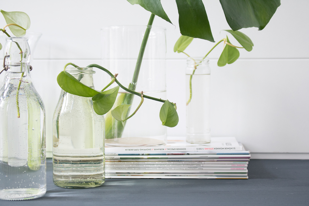 urban-jungle-bloggers-plants-and-glass-6