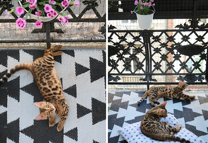 interior-blogger-bengal-cats-6